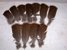 11 Wild Turkey Feathers 6 - 8 inches in length w/quills Home Decor Primitive Crafts by midmowoodworks on Etsy