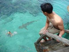 Whoa!! Shark!