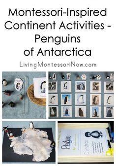 Montessori-Inspired Continent Activities – Penguins of Antarctica Montessori Homeschool, Montessori Classroom, Montessori Activities, Montessori Trays, Homeschooling, Montessori Elementary, Elementary Science, Animal Activities, Winter Activities