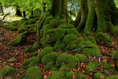 The stunning west coast of Scotland. #westisbest #portappin #argyll #Scotland #green #trees #Moss #nature #NaturePhotography #naturelovers West Coast Scotland, Space Wedding, Scottish Highlands, Green Trees, Glamping, Nature Photography, River, Plants, Outdoor