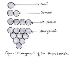 Morphology means systematic study of external characters of bacteria. Morphology of bacterial cell deals with study of Size of bacteria. Arrangement of bacteria. Medical Coding, Medical Technology, Technology Articles, Energy Technology, Technology Gadgets, Med Lab, Medical Laboratory Science, Forensic Science, Medical Design