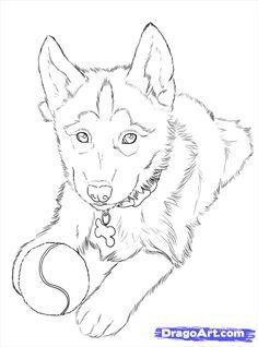 how to draw huskies, draw a husky step 24