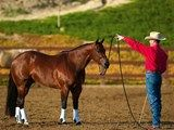 Prepare to Longe for Respect with Clinton Anderson   Horse&Rider