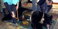 Terminar con el maltrato animal en CHINA