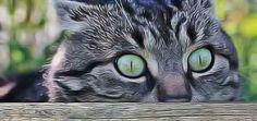 En finir avec l'urine de chat dans le jardin et sous le balcon. Les plantes répulsives efficaces qui font fuir les chats. Les meilleurs répulsifs naturels pour chats.