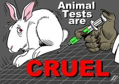 Stop animal testing.......China please you too
