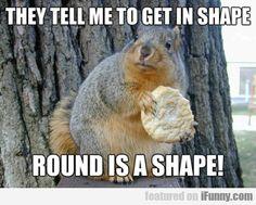 30fe571e2afd03aecb38caf9dd447227 fox squirrel funny squirrel funny squirrels, funny squirrel photos, squirrel memes oh, so,Funny Squirrel Memes