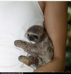Hug from a sloth!