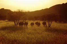 Selbstfahrerreise durch Namibia - Reisebericht