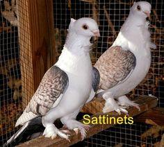 Sattinets