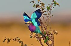 EnricoSafaris Provide A Wide Range Of Enjoyable BirdSafari Experiences In Botswana So