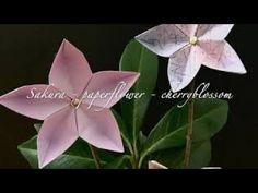 Origami - cherryblossom - YouTube
