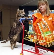 I like to imagine what my cats would choose if they were shopping.