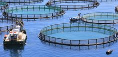 The Coming Green Wave: Ocean Farming to Fight Climate Change    inShare  NOV 23 2011, 9:56 AM ET 7  Seaweed farms have the capacity to grow huge amounts of nutrient-rich food, and oysters can act as an efficient carbon and nitrogen sink