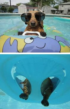 Chilling In The Pool. Yo I'm a surfer pup!