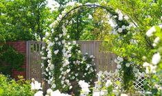 英式玫瑰花园English Garden