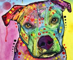 Pit Bull-dean Russo