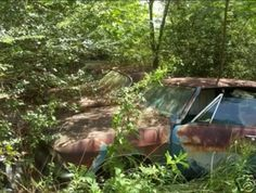 Jungle covered Corvairs