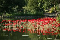 France, Somme (80) Amiens : hortillonnages | par (vincent desjardins)