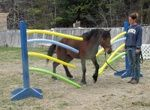 Lots of obstacle ideas  Curly Horse Country