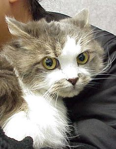 Exclusively Cats Veterinary Hospital Blog: What is a pyometra?