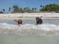 Love . dog. beach.