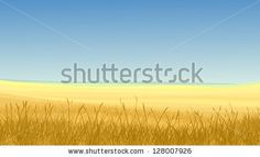 Vector horizontal illustration: field of yellow cereals grass against clear blue sky in hot day.