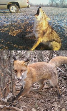 Petition - Ban Trapping! Please sign. :(