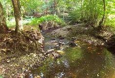 beautiful forest, creuse