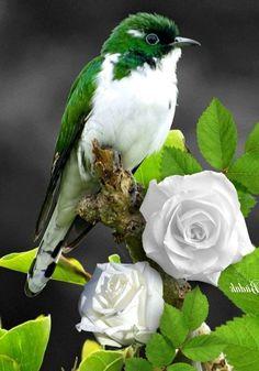 Kinds Of Birds, All Birds, Cute Birds, Pretty Birds, Little Birds, Exotic Birds, Colorful Birds, Green Birds, Beautiful Creatures