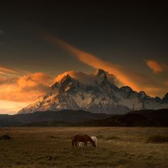 Crédit : Andy Lee Patagonie au Chili