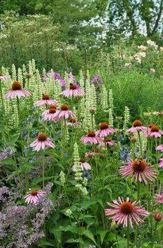 Plantenborders in de tuin van Maurice Vergote