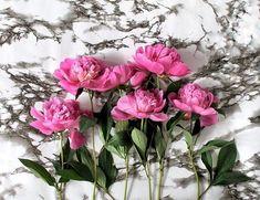 Free jigsaw puzzles online! 🙂 #puzzle #jigsaw #jigsawpuzzles #game #puzzleonline #games #flora #flowers #floristry #peonies Flora Flowers, Unusual Flowers, Puzzle Games For Kids, Flower Pictures, Pink Peonies, Dream Garden, Floral Wreath, Bouquet