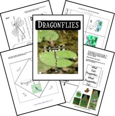 Dragonfly Animal Study & Lapbook