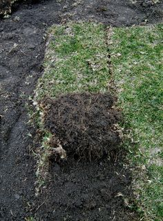 How to remove grass from your lawn with a shovel. How to remove grass from your lawn with a shovel. Concrete Backyard, No Grass Backyard, Gravel Patio, Concrete Pavers, Country Landscaping, Modern Landscaping, Backyard Landscaping, Backyard Ideas, Garden Ideas