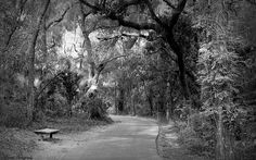This is one of the many old roads at fort cooper state park tort cooper state park preserves the site of a field fortification built during the early days , of the second Seminole war. located just outside present-day inverness, Florida, the park is popular with nature lovers as well as history enthusiasts.,