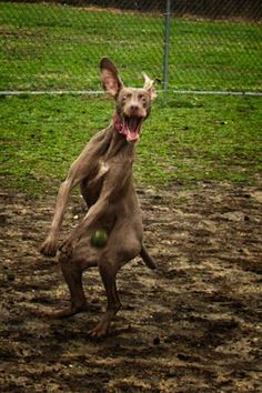 And this WILL NOT happen to you: Look at this picture of a dog getting hit in the crotch with a tennis ball