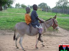 Courtesy: GAMBIA HORSE AND DONKEY TRUST. Ockley, Surrey (UK and GAMBIA).