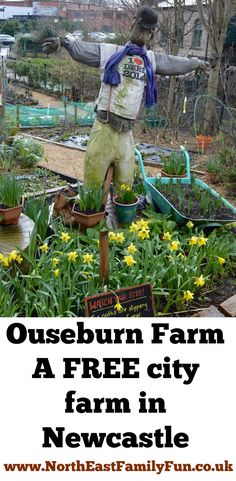 Ouseburn Farm Newcastle | A FREE Place to Take the Kids Family Days Out, Family Life, City Farm, North East England, Best Cities, Newcastle, The Guardian, North America, Road Trip