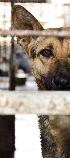 En China sacrifican gatos y perros. Firmar esta petición hará eco en sus mandatarios!