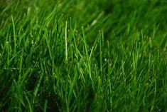 Kesällä etsin töitä kovasti että pääsisi tekemään jotakin. Viime kesänä ajelin ruohoa korvausta vastaan kun kaupungilta en kesätöitä löytänyt.