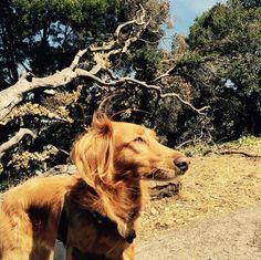 Working on that tan at Buena Vista Park - San Francisco, CA - Angus Off-Leash