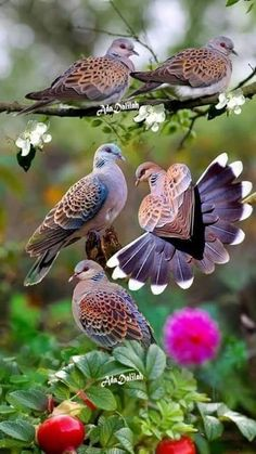 Cute Bird Houses Pictures 38 Ideas For 2019 Beautiful Nature Pictures, Most Beautiful Birds, Beautiful Nature Wallpaper, Beautiful Soul, Cute Birds, Pretty Birds, Exotic Birds, Colorful Birds, Beautiful Creatures