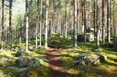 Independent hike allows your brain to relax. I needed that this autumn which is why I explored the Leivonmäki National Park. Finland, National Parks, Hiking, Mindfulness, Explore, Healthy, Plants, Walks, Exploring