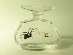 Till Death Do Us Part, Mating Pair Wet Specimen Black Widow Spiders In Vintage Perfume Bottle - I need to learn how to set specimens in gel...