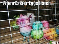 Funny Easter photos : theCHIVE