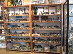 A little of everything Petoskey!  http://www.brainstormsb.com/#!petoskey-stone-products/cqj6