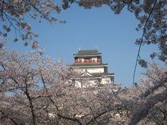 鶴ヶ城 会津 旅の専門家が選ぶ!今年こそ見たい桜&お花見名所まとめ2014 | [たびねす] by Travel.jp