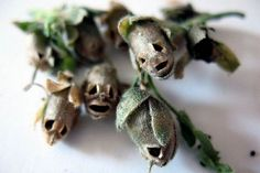 """Save your """"screaming skull"""" snapdragon seedpods for tiny Halloween bouquets"""