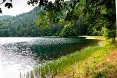 Feldsee-am-Feldberg-im-Südschwarzwald-the-soft-part-of-the-lake Parks, Seen, Felder, Black Forest, Germany, River, Modern, Outdoor, Inspiration